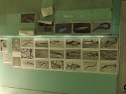 Rybí laboratoř