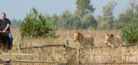 Z černobylské zóny utekl pár koní Převalského