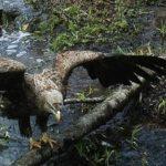 Černobyl: Země zvířat