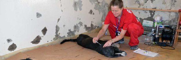 V Černobylu kastrují toulavé psy